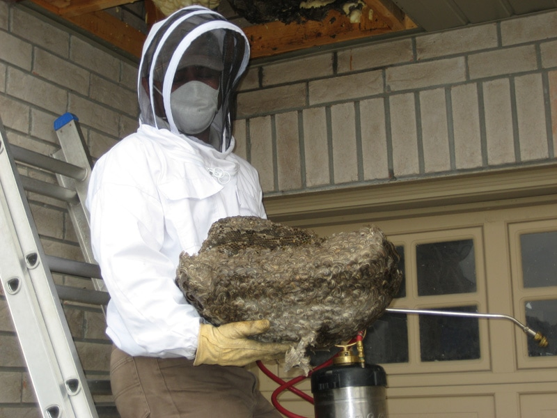 wasp nests how to get rid of them