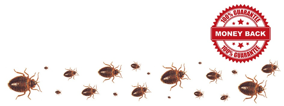 Guaranteed Bed Bug Extermination Toronto