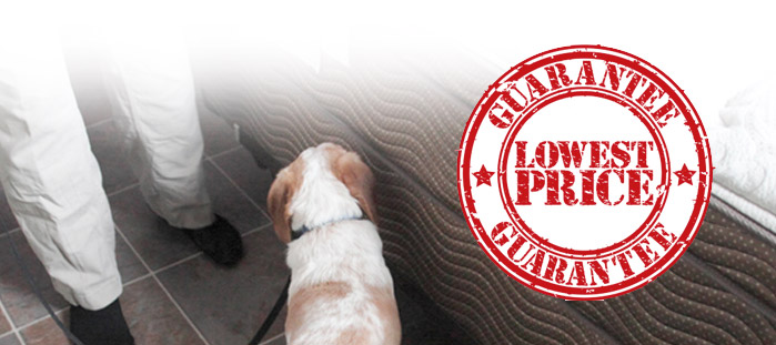 K9 Bed Bug Inspection Toronto