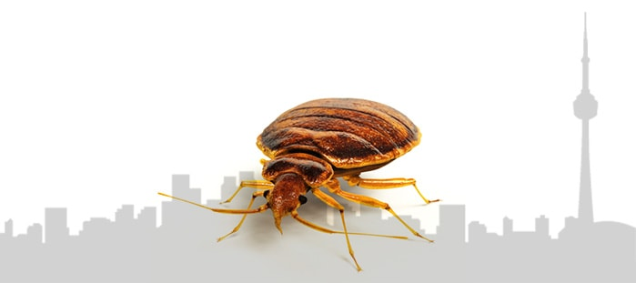 Toronto Bed Bug Extermination