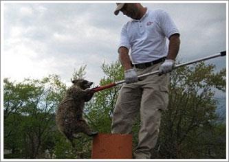 commercial wildlife control toronto