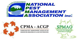 Eco Friendly Pest Control Toronto