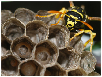 toronto wasp nest removal