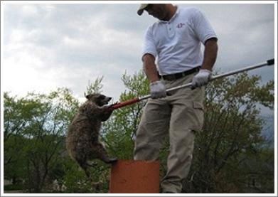 wildlife control Mississauga