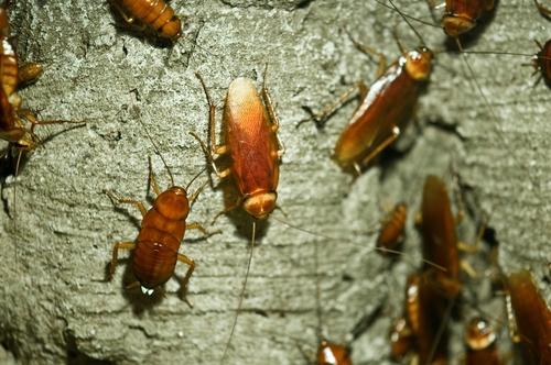 cockroach extermination toronto