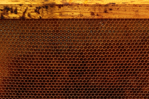 Empty honey bee frame from a hive with Collony Collapse Disorder
