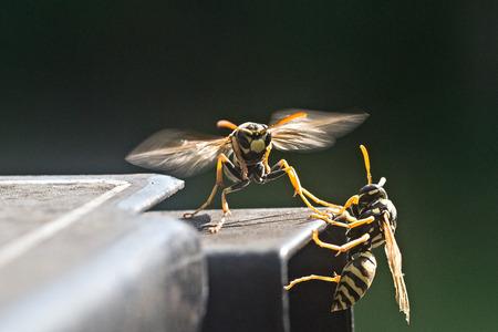 wasps ruining bbq