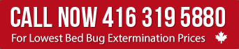 Call for Lowest Bed bug Extermination prices