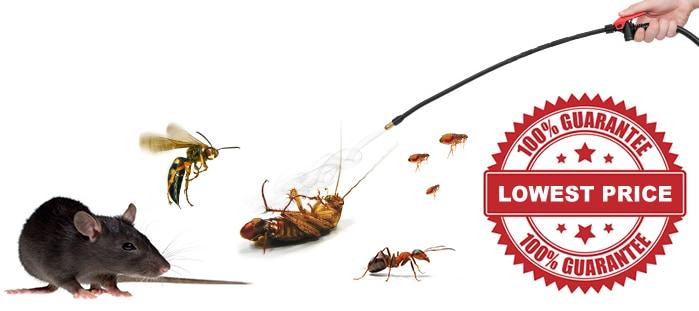 pest control Brampton