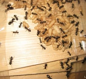 Ant Control Services in Toronto
