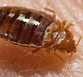 bed-bug-exterminator-toronto