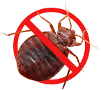 Eliminate Bed Bugs in Toronto