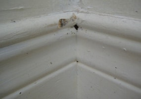 bed bug in baseboards