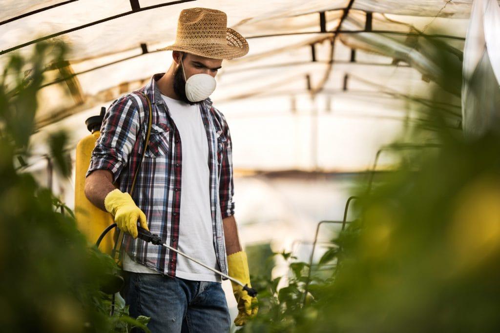 farmer helping crops