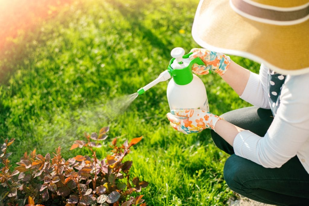 Woman spraying plants using water pulverizer