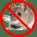 Mouse Control Toronto