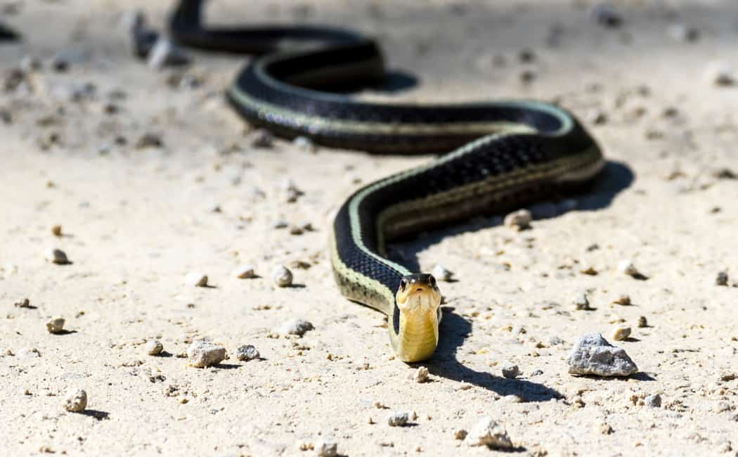 Snake Removal Toronto