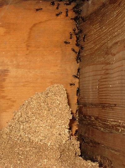 Toronto Ant Infestation Driveway