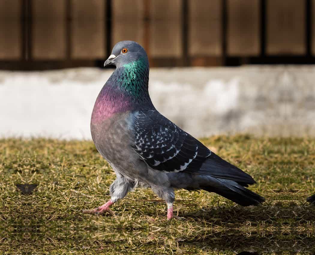 Humane Bird Removal Toronto