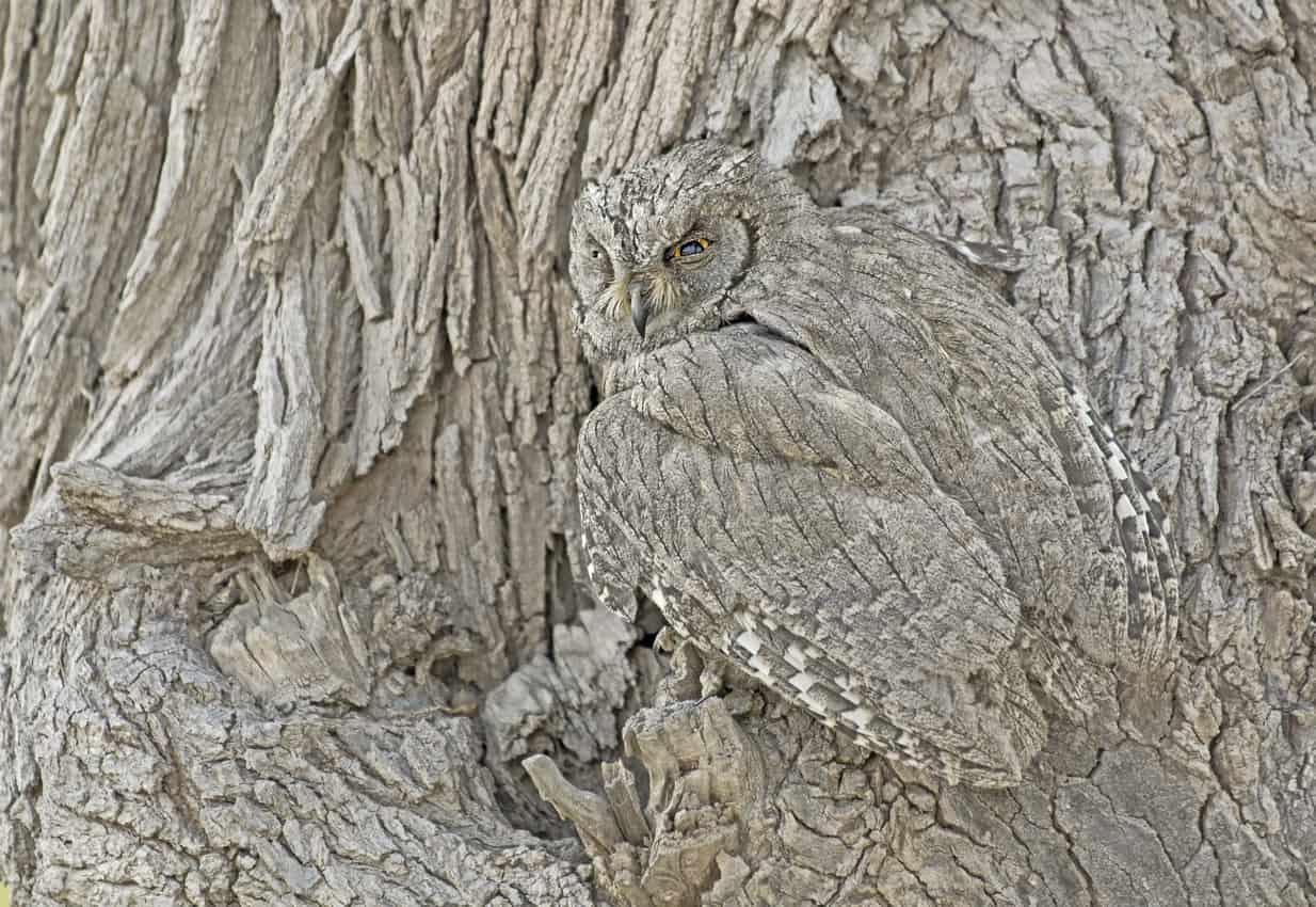 Owl in habitat
