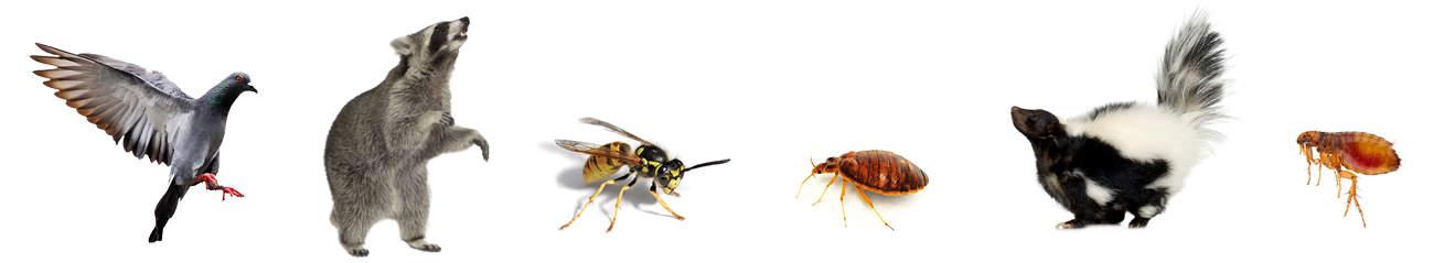 pest-control-services-toronto.jpg