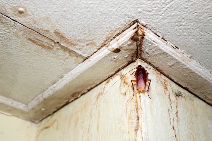 cockroach in a corner